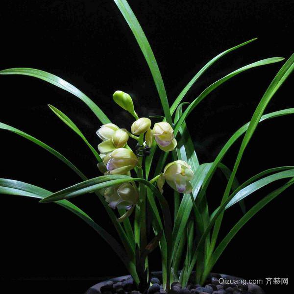 兰花怎么养才能开花