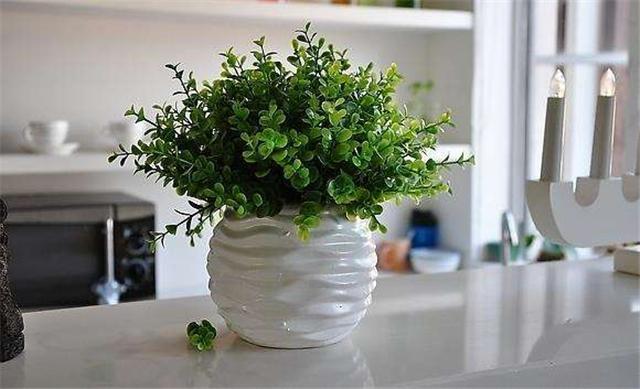 植物除味法