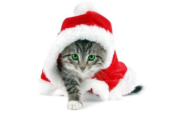 家里养猫对财运好不好