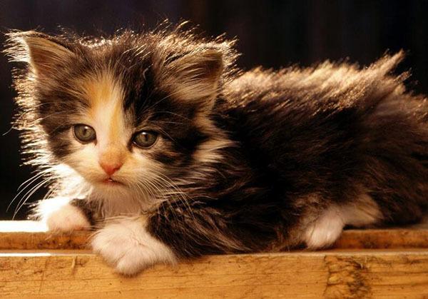猫是招鬼还是辟邪的