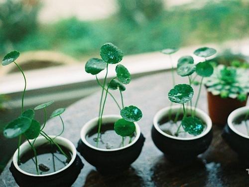 装修污染绿色植物吸收法