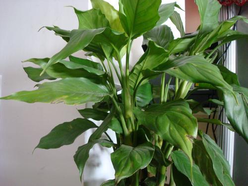 家中摆放植物