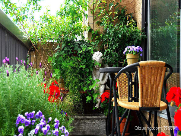 适合阳台种植的植物
