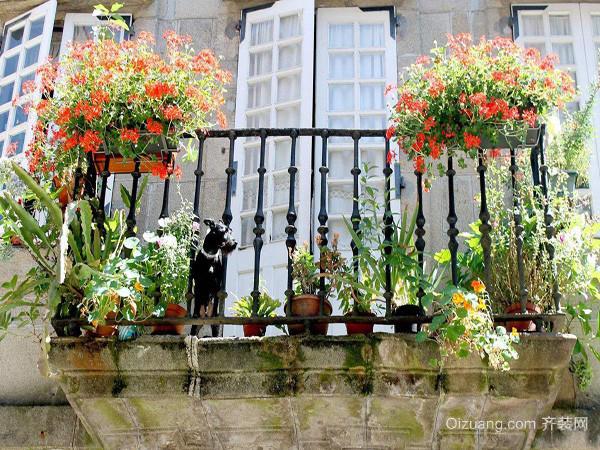 阳台种植植物