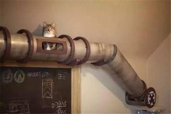 有宠物的家庭装修