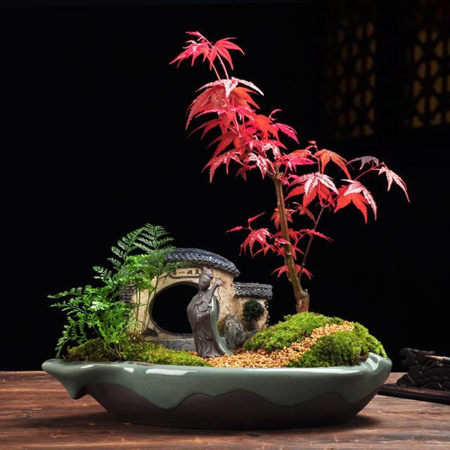 红色植物搭配