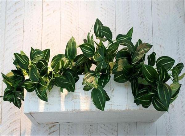只靠绿色植物就能够除甲醛