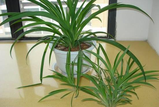 巧用绿色植物除异味