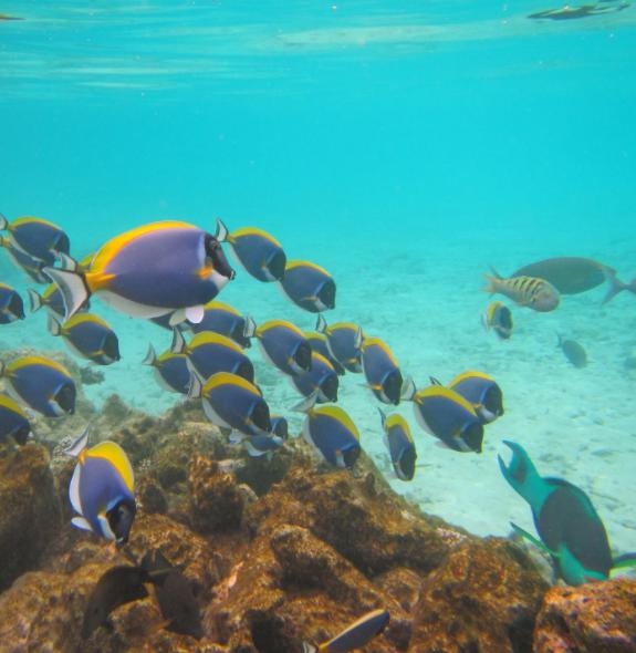 十大养不死的热带鱼