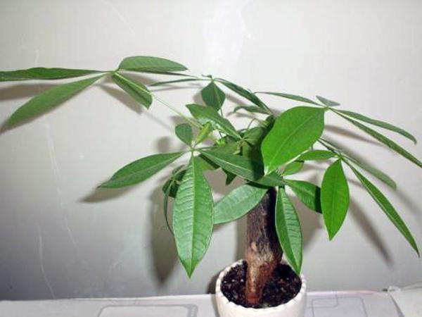 客厅摆放什么植物招财