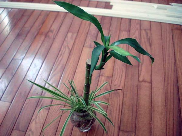 客厅摆放植物风水禁忌