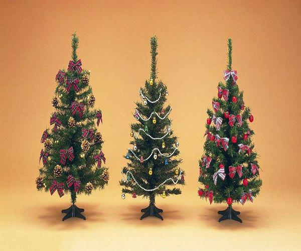 圣诞树是什么树