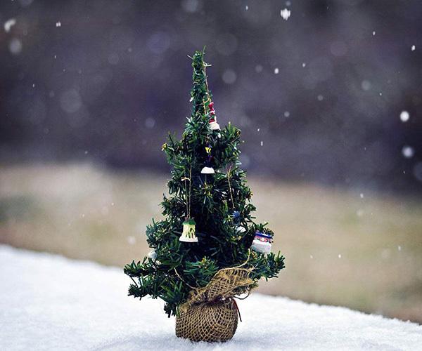 圣诞树装饰品有哪些