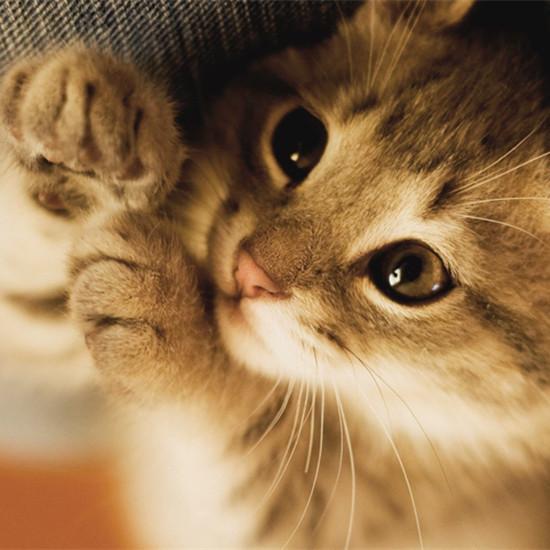 养猫注意事项