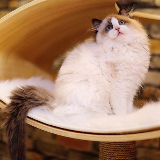 养猫的好处和坏处
