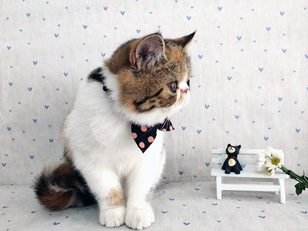 初次养猫养什么品种好