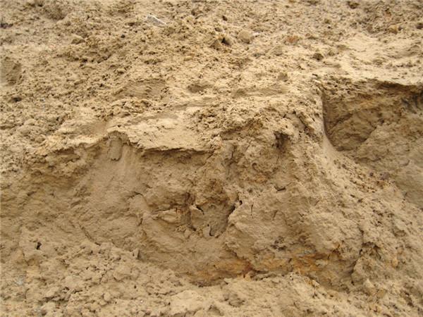 沙子价格多少钱一吨