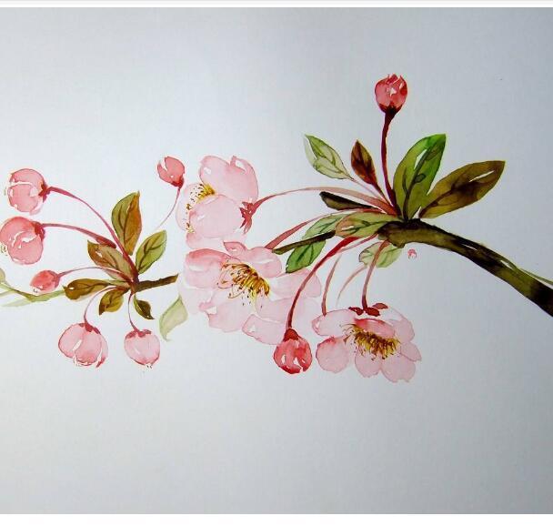 海棠花花语是什么