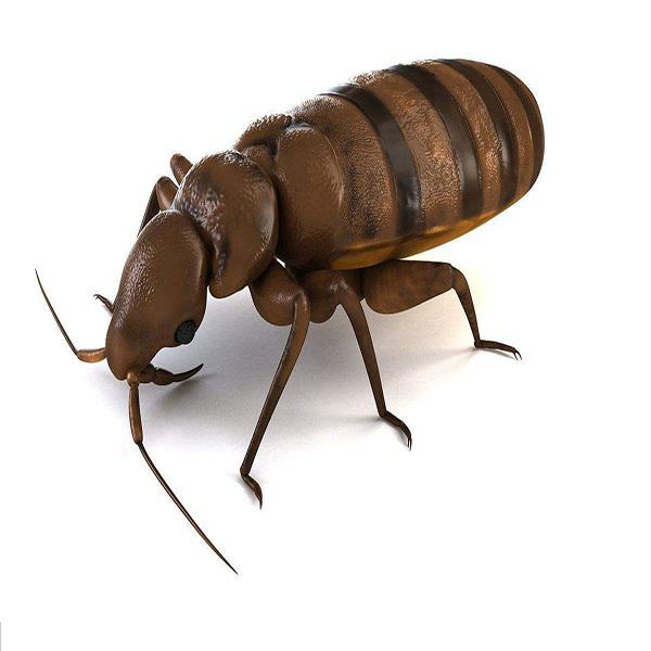 螨虫是什么