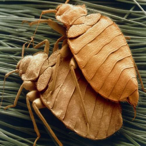 螨虫过敏怎么治疗