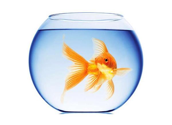 养鱼有哪些风水禁忌