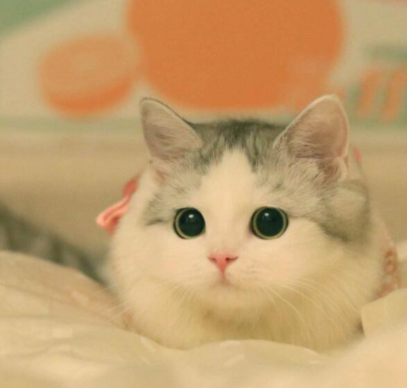 什么属相不能养猫
