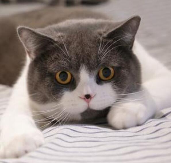 什么属相能养猫