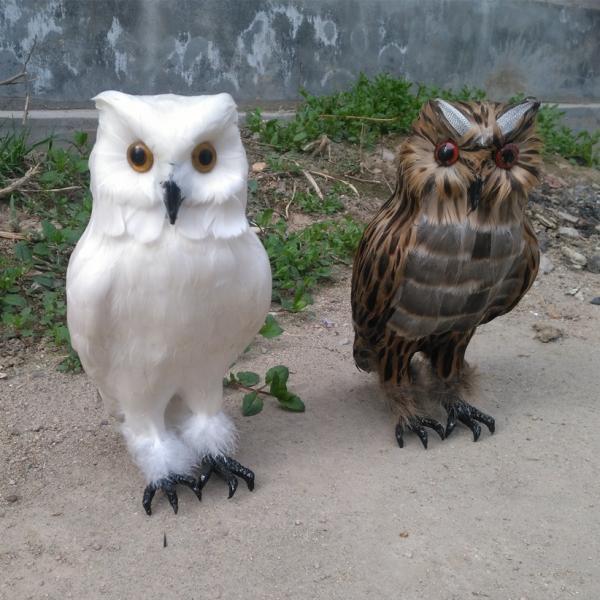 猫头鹰是保护动物吗