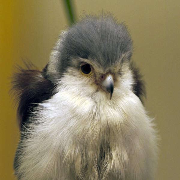 猫头鹰是几级保护动物