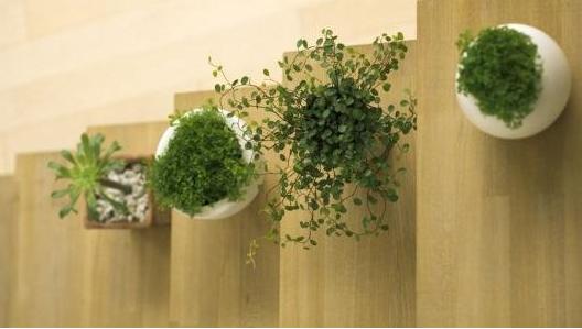 植物除味法清除甲醛危害