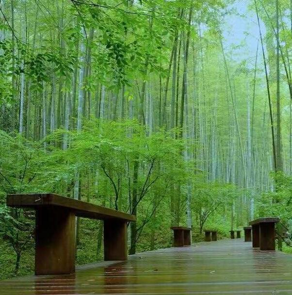 杭州旅游景点排名前十