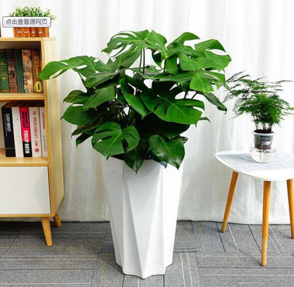 办公室摆什么绿色植物