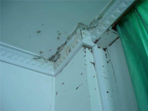 装修白蚁防治方法