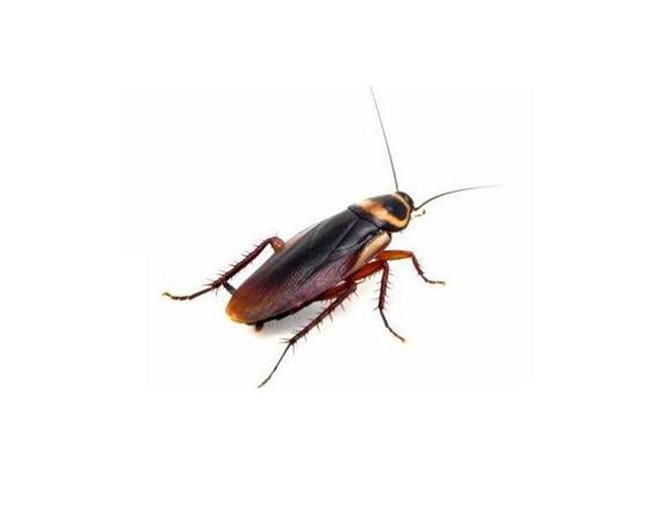 如何防止蟑螂爬到床上