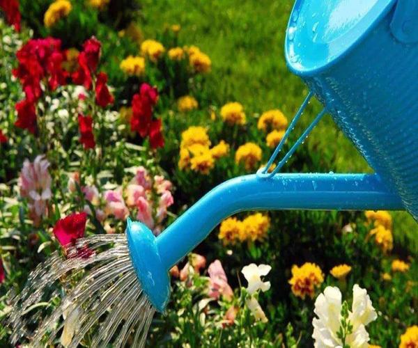夏天浇花的最佳时间