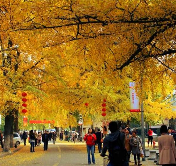 四川大学参观游玩攻略
