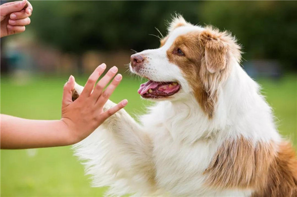 什么属相不能养狗