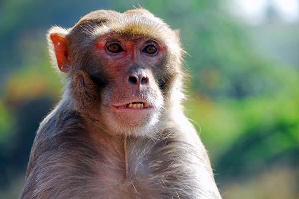 属猴的本年多大