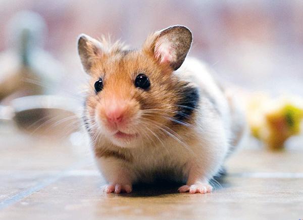 2020属鼠人全年运势