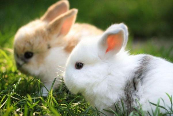 属兔的人今年多大