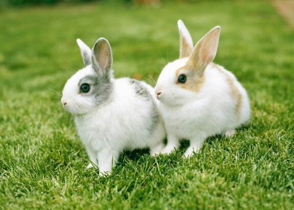 属兔人运势