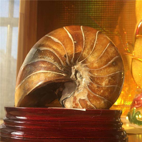 海螺摆件的风水作用