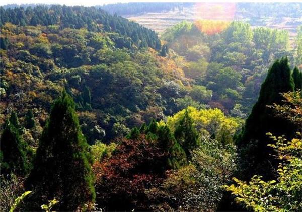 原山森林公园