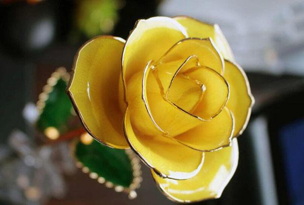 19朵黄玫瑰花语是什么