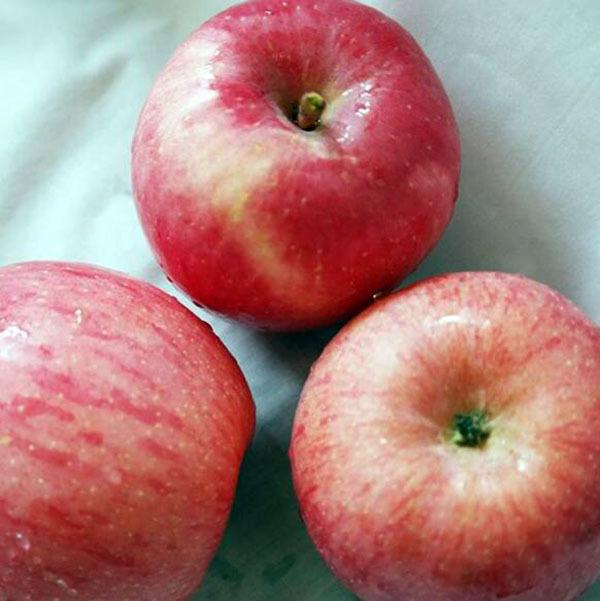 可保鲜1年的苹果