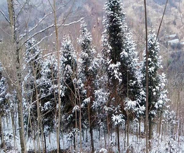 冬月初一是几月几日