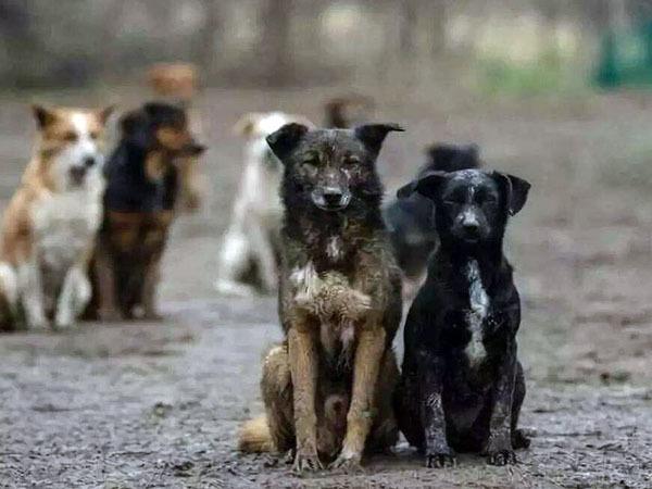 梦见一群狗是什么意思