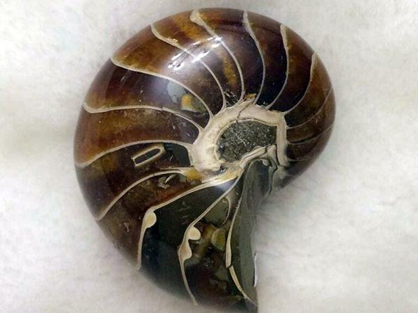 海螺擺件的風水作用