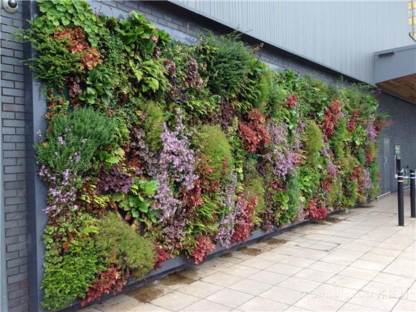 绿植墙怎么制作方法