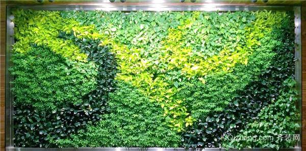 绿植墙种什么植物